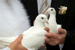 Doves royalty free stock photos