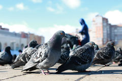 Doves on the background of the city Stock Photo