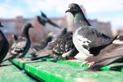 Doves on the background of the city Stock Images