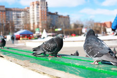 Doves on the background of the city Royalty Free Stock Images