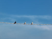 Doves on cable Stock Images