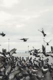 Doves in the city street Stock Image