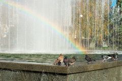 Doves are drinking water in a fountain. royalty free stock photo