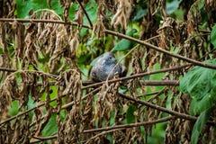 Doves in dry shrubs royalty free stock image