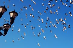 Doves in flight. And cropped street lamp Stock Image