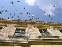 Doves flying Royalty Free Stock Images