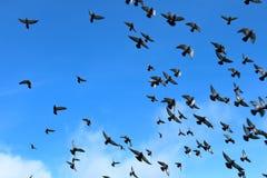 Doves_flying Royalty-vrije Stock Afbeeldingen