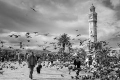 Doves flying near the old clock tower, Izmir, Turkey stock image
