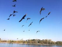 Doves stock photo