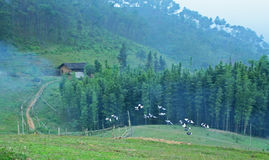 Doves flying. Over a valley Royalty Free Stock Image