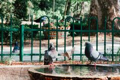 Doves on a fountain Stock Image
