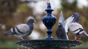 Doves on Fountain Cadiz Spain Stock Image