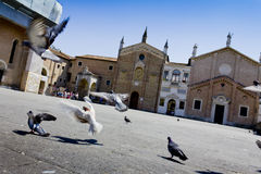Doves in front of Basilica of Saint Anthony Royalty Free Stock Photo