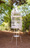 Doves inside the jailbird Royalty Free Stock Images