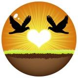 Doves in love. Two doves in love in sunset Stock Photography
