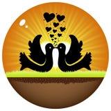 Doves in love Stock Photos