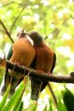 Doves in love. In Hong Kong stock image