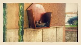 Doves of love. The house has acquired external mail box wrapped together with two pigeons Royalty Free Stock Photo