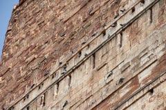 The doves of Meherangarh Fort in Jodhpur Stock Image