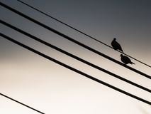 Doves Perched on The Oblique Cable. Doves Perched on The Oblique Large Cable Stock Photo