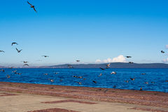Doves in Petrozavodsk. Almost cloudless sky over Petrozavodsk. Pigeons fly up from the pier. Somewhere in the distance one can see the settlement. Vibrant fall Stock Image