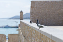 Doves. Royalty Free Stock Images