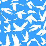 Doves and pigeons seamless pattern on blue background for peace concept and wedding design. Royalty Free Stock Photos