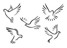 Doves and pigeons set. For peace concept and wedding design Royalty Free Stock Images