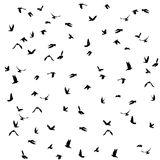 Doves and pigeons set for peace concept and. Wedding design. Flying dove sketch set. Vector illustration Stock Photos