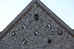 Doves protecting their roost entrance Royalty Free Stock Photo