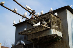 Doves on the roof Royalty Free Stock Photo