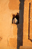 Doves. In the shelter hole outer church wall Royalty Free Stock Images