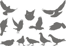 Doves silhouettes bird Royalty Free Stock Photos