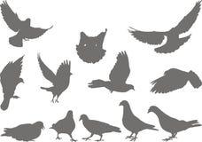 Doves silhouettes bird. Set of gray pigeon on white background Royalty Free Stock Photos