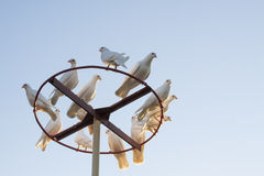 Doves. Sitting in the backgorund of sky Stock Image
