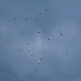 Doves in the Sky Stock Photos