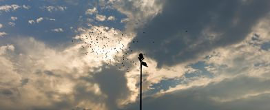 Doves soar in the beautiful evening sky. In the beautiful evening sky, a flock of pigeons soar in the sky, giving people a sense of tranquility and distance Stock Images