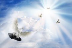 Doves soaring in solar beams stock photo