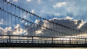 Doves and Suspension Bridge. Royalty Free Stock Photography