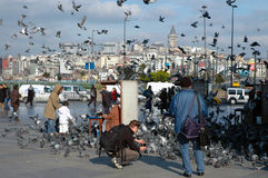 Doves on Taksim Square in Istanbul, Turkey Royalty Free Stock Images