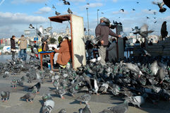 Doves on Taksim Square in Istanbul, Turkey Stock Photography