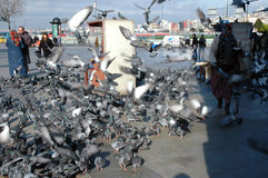 Doves on Taksim Square in Istanbul, Turkey Stock Image