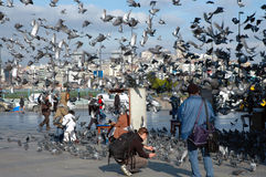Doves on Taksim Square in Istanbul, Turkey. ISTANBUL – DECEMBER 25: Doves on Taksim Square in Istanbul, Turkey on December 25, 2007. Taksim is a popular Royalty Free Stock Images