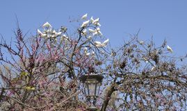 Doves on tree Stock Images