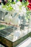 Doves on a Wedding Celebration Royalty Free Stock Image
