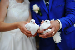 Doves at a wedding Stock Photography