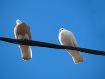 Doves on a wire Stock Images