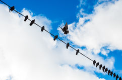 Doves on wire Stock Images
