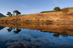 dovestone reflection with trees royalty free stock image