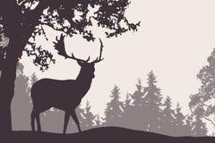 Dovhjortanseende under ett lövfällande träd med barrträds- för royaltyfri illustrationer